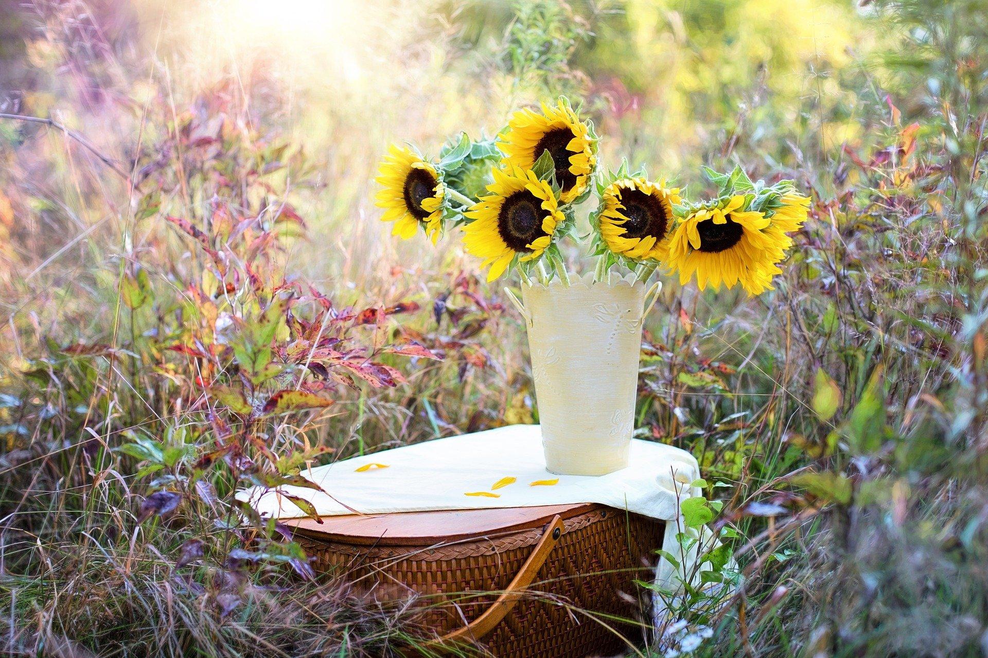 obrazek przedstawia łąkę kolorowoych kwiatów na któej stoi stolik z białym obrusem a na nim biały wazon, w któym włożone są słoneczniki